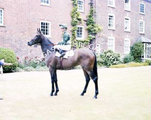 Scintillate with Pat Eddery (696-05)